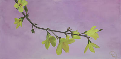 Painting - Forsythia by Stephen Daddona
