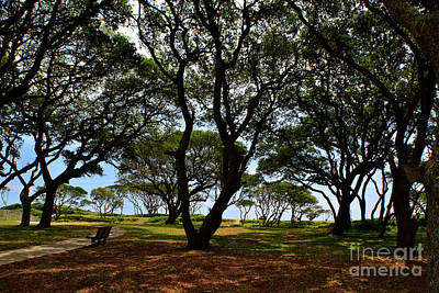 Photograph - Fort Fisher Beach Trees  by Amy Lucid