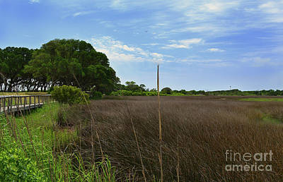 Photograph - Fort Fisher Grass Meadow by Amy Lucid