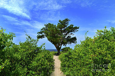 Photograph - Fort Fisher Hilltop Tree by Amy Lucid