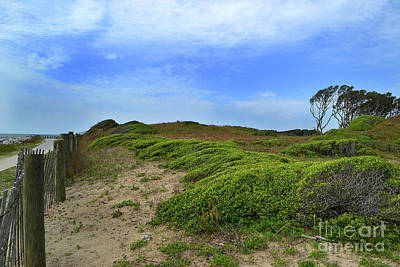 Photograph - Fort Fisher Landscape by Amy Lucid
