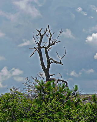 Photograph - Fort Pickens Landscape by Anthony Dezenzio