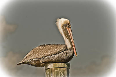 Photograph - Fort Pierce Pelican by Trish Tritz
