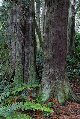 Photograph - Fort Worden Forest by Laurel Powell