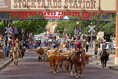 Photograph - Fort Worth Cattle Drive by Jonathan Davison