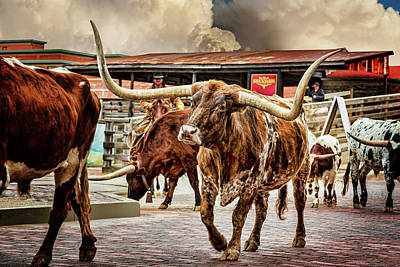 Cattle Drive Photograph - Fort Worth Stockyards by Kelley King