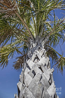 Photograph - Fortified Foundation Palm by Roberta Byram