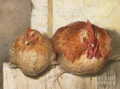 Cockerel Painting - Forty Winks by JG Marks