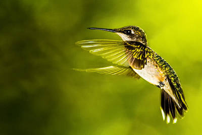 Photograph - Forward Stroke - Hummingbird by Barry Jones