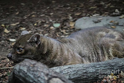 Photograph - Fossa by Suzanne Luft
