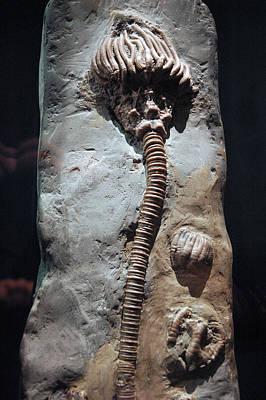 Photograph - Fossil Brain Stem by LeeAnn McLaneGoetz McLaneGoetzStudioLLCcom
