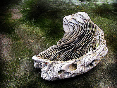 Photograph - Fossil by Colleen Kammerer