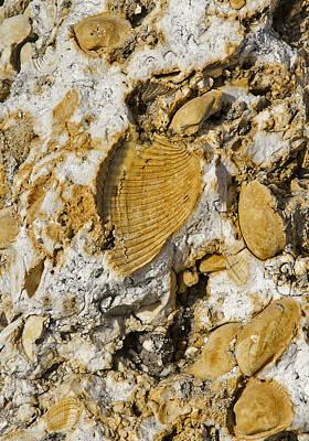 Photograph - Fossil Rock Abstract 1 by Bob Slitzan