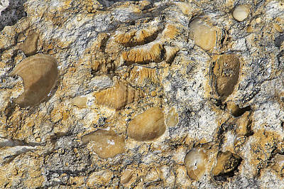 Photograph - Fossil Rock Abstract 3 by Bob Slitzan