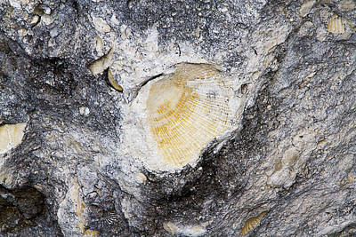 Photograph - Fossil Rock Abstract 5 by Bob Slitzan