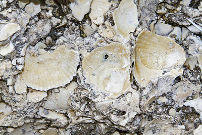 Photograph - Fossil Rock Abstract 7 by Bob Slitzan