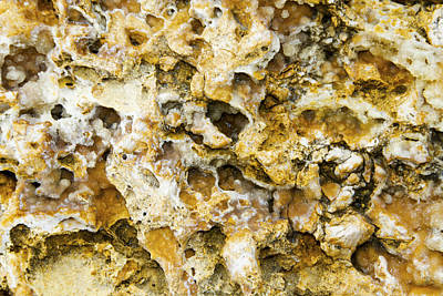 Photograph - Fossil Rock Abstract 8 by Bob Slitzan