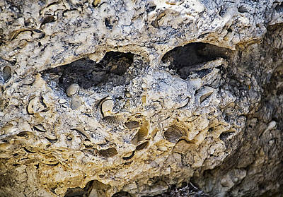 Photograph - Fossil Rock Abstract - Eyes by Bob Slitzan