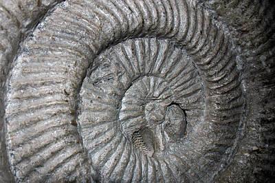 Photograph - Fossil Spiral  by LeeAnn McLaneGoetz McLaneGoetzStudioLLCcom