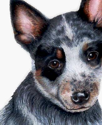 Cattle Dog Drawing - Foster Detail by Kristen Wesch