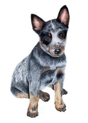 Cattle Dog Drawing - Foster by Kristen Wesch