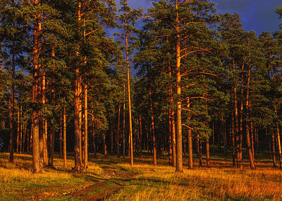 Photograph - Forest After Rain Storm by Vladimir Kholostykh