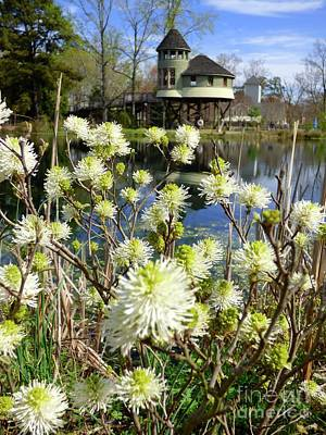 Photograph - Fothergilla And Tree House by Jean Wright