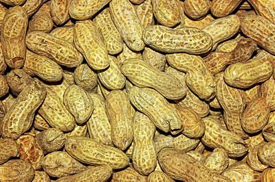 Digital Art - Found A Peanut by Becky Titus