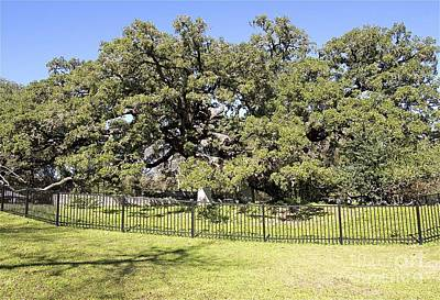 Founders Tree Photograph - Founders' Oak by Gary Richards