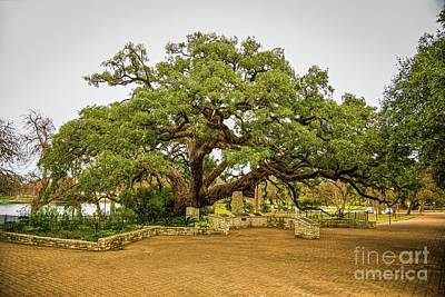 Photograph - Founders Oak by Jon Burch Photography