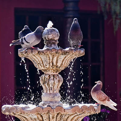 Photograph - At The Fountain by Tatiana Travelways