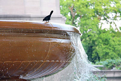 Photograph - Fountain Bird by Cora Wandel