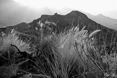 Photograph - Fountain Grass Anaga Mountains Tenerife Monochrome by Marek Stepan
