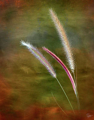 Photograph - Fountain Grass by Endre Balogh