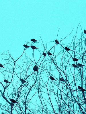 Four And Twenty Blackbirds Art Print