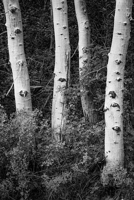 Photograph - Four Aspens by Alexander Kunz