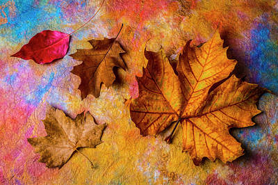 Photograph - Four Autumn Leaves by Garry Gay