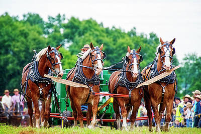 Photograph - Four Beauties At Horse Progress Days by David Arment