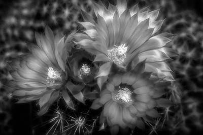 Photograph - Four Blooms - Black And White by Donna Kennedy