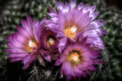 Photograph - Four Blooms by Donna Kennedy