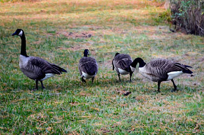 Canadian Geese Painting - Four Canadian Geese by Lanjee Chee
