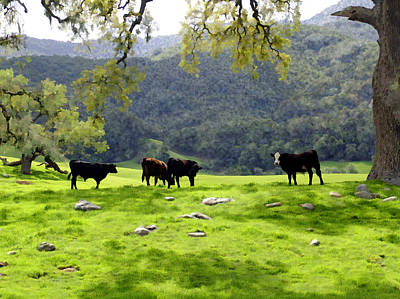 Photograph - Four Cows At Nojoqui Ranch by Kurt Van Wagner