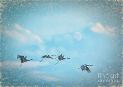Wetlands Drawing - Four Cranes One Moon by Janice Rae Pariza