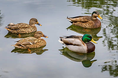 Lenz Wall Art - Photograph - Four Ducks by George Lenz