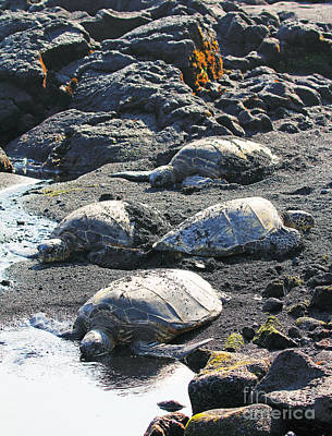 Reptiles Photograph - Four Endangered Greenies by Jennifer Robin