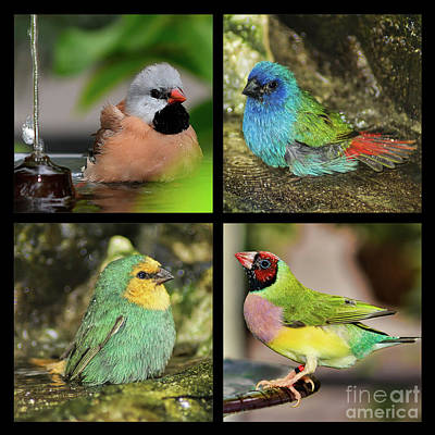 Photograph - Four Finches by Olga Hamilton