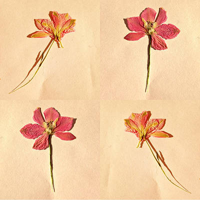 Pressed Flowers Photograph - Four Flowers by Little Bunny Sunshine