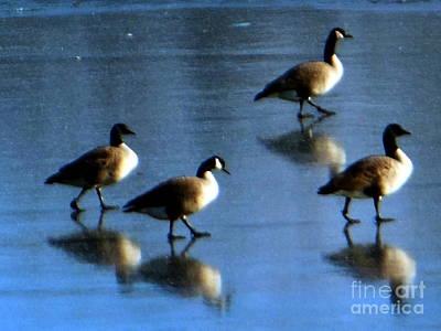 Four Geese Walking On Ice Art Print