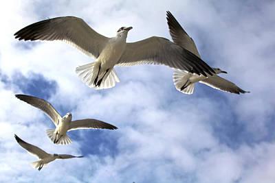Four Gulls Art Print by Robert Och