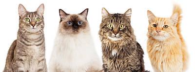 Tabby Photograph - Four Happy Cats Website Banner by Susan Schmitz